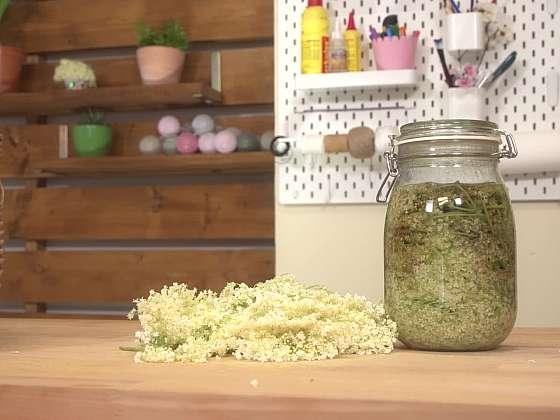 K čemu vám poslouží tonikum z bezových květů? (Zdroj: Prima DOMA)