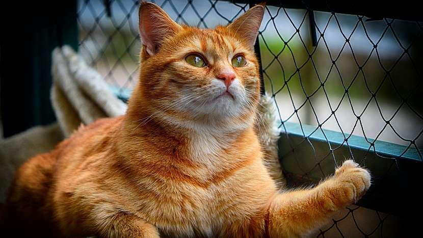 Tasemnice se nejvíce vyskytuje u koček s volným pohybem venku, které si pochutnávají na ulovených hlodavcích