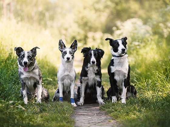 Chraňte vaše psy před nebezpečnými klíšťaty (Zdroj: AVEFLOR)