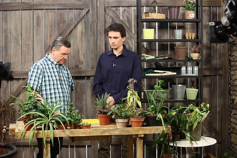 Jak správně množit pokojové rostliny 2