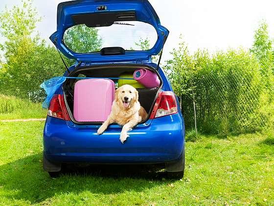 Vyrážíte na dovolenou autem s domácím mazlíčkem? (Zdroj: Depositphotos)