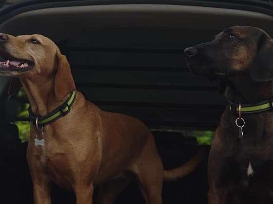 Cestování se psem musí být hlavně bezpečné (Zdroj: Prima DOMA)