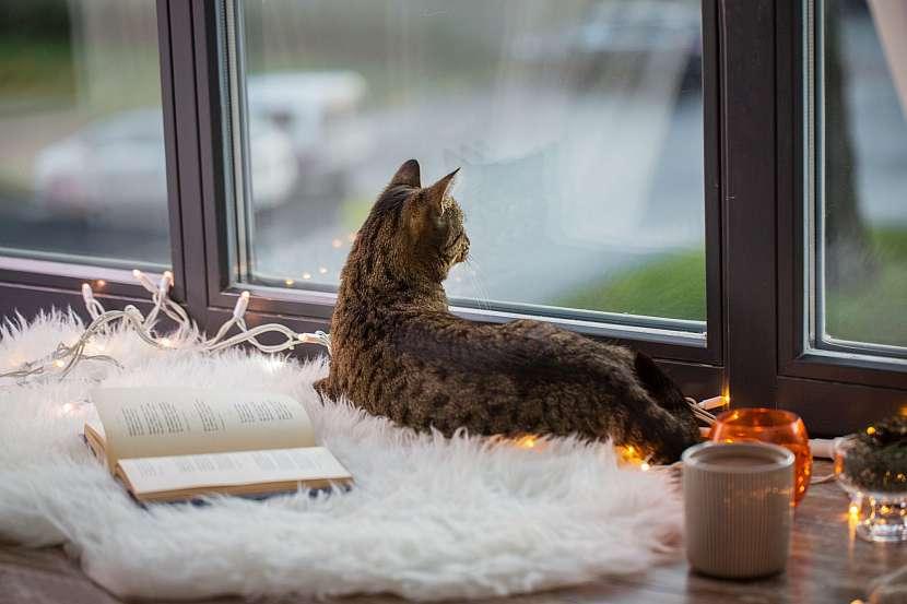 Kočka za oknem