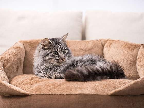 Kočka seniorka – stárne s noblesou a nemá ráda změny (Zdroj: Depositphotos)