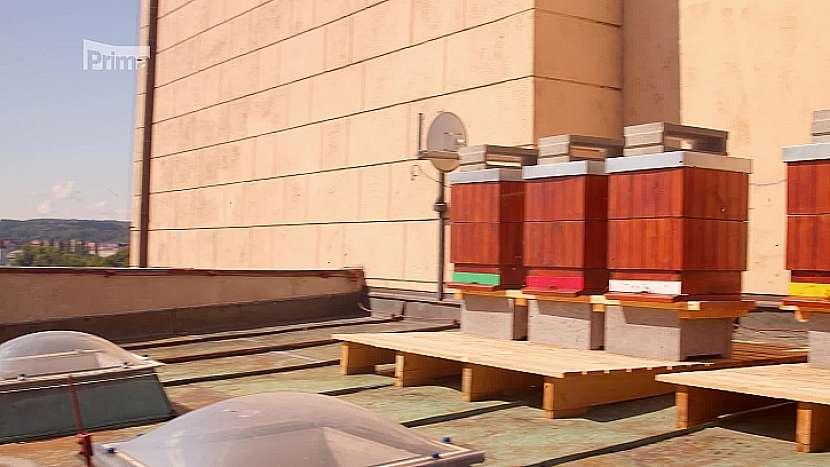 Včely ve městě