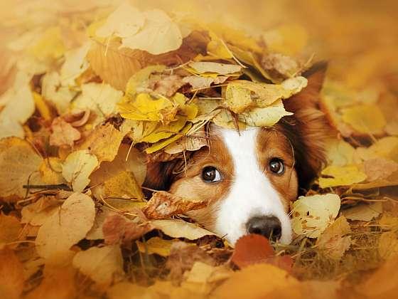 Podzim pro psa neznamená čas odpočinku (Zdroj: Depositphotos (https://cz.depositphotos.com))