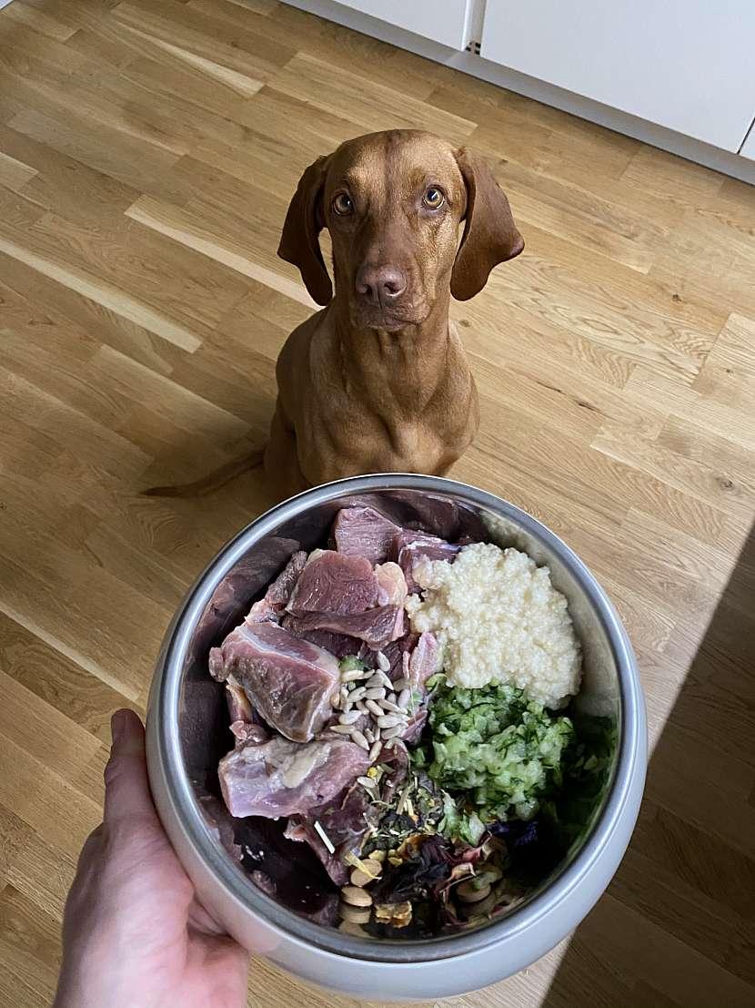 Skladba potravy