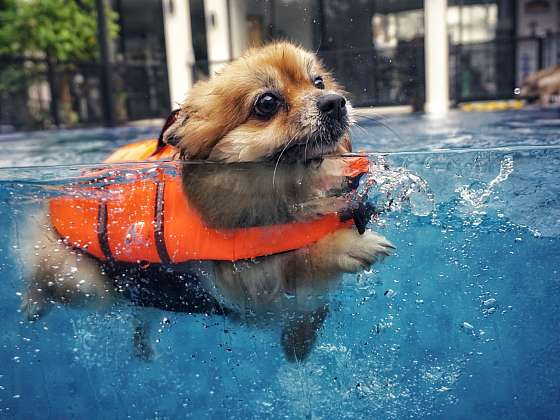 I psa můžete naučit plavat (Zdroj: PetCenter)
