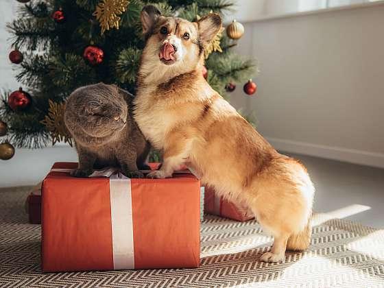 Lámete si hlavu, co dát vašim mazlíčkům k Vánocům? Darujte jim dobrotu (zdroj: Depositphotos)