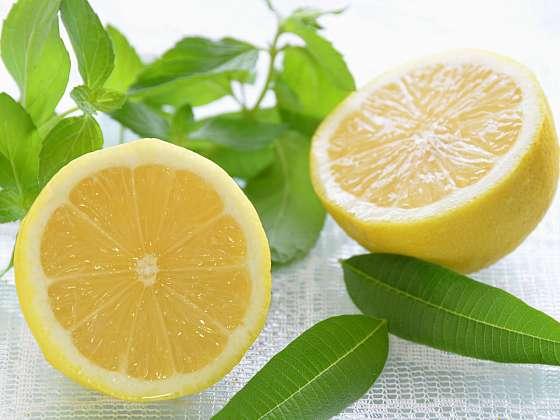 Verbena citronová je nepostradatelnou rostlinkou v domácí lékárně (Zdroj: Depositphotos (https://cz.depositphotos.com))
