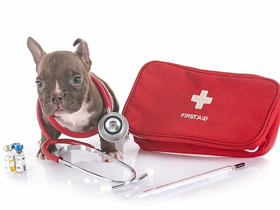 Psí lékárnička se hodí doma i na cestách (Zdroj: Depositphotos)