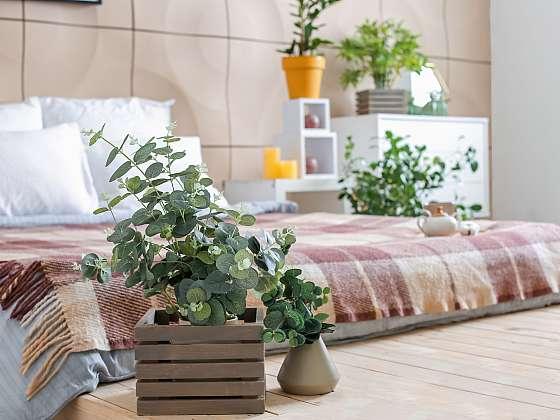 Pěstujte doma eukalyptus, bude se vám lépe dýchat (Zdroj: Depositphotos (https://cz.depositphotos.com))