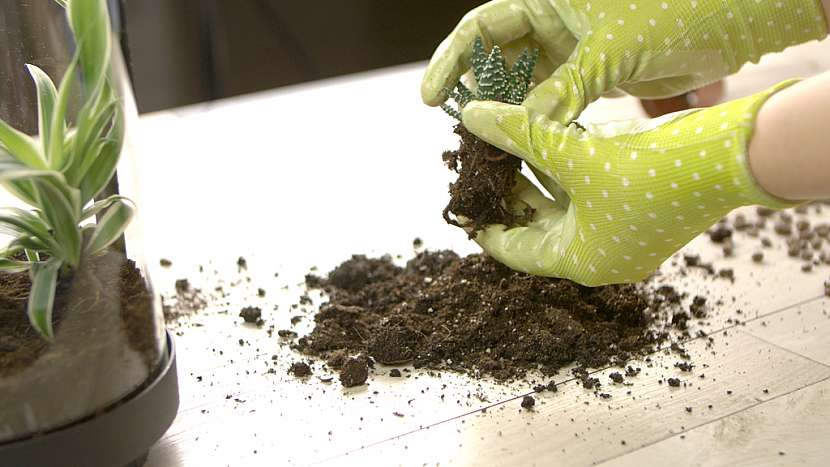 DIY skalka ve skle: zasaďte rostliny