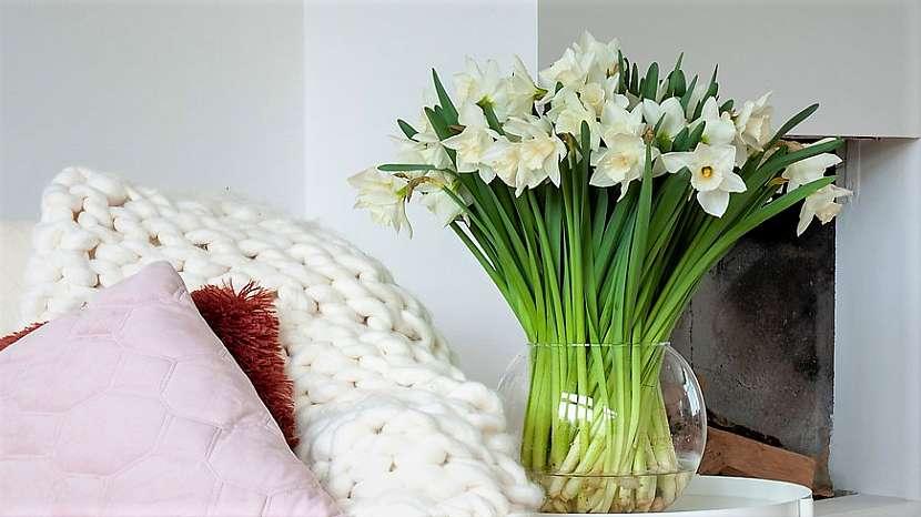Aby kytice vydržela dlouho krásná: narcis (Narcissus) vydrží ve váze dlouho