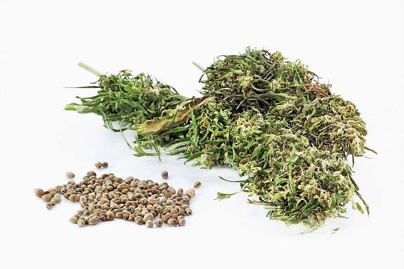 Sušené konopí, semena