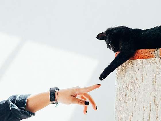 Kastrovat či nekastrovat svého kočičího mazlíčka? (Zdroj: Krmiva Pučálka / UNSPLASH)