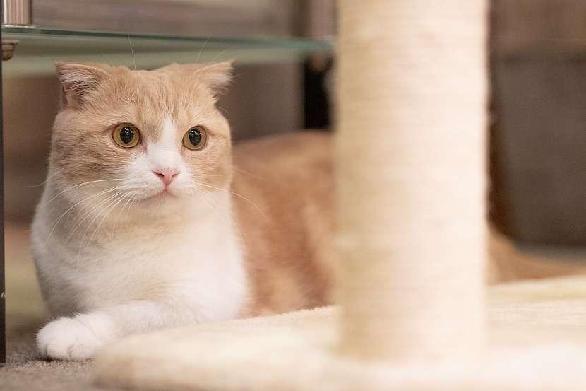 Kočka2