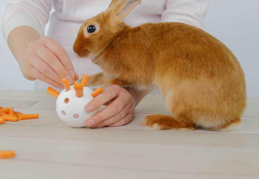 Jak nakrmit a zabavit králíka: mrkevve florbalovém míčku