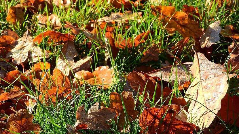 Předpověď počasí a zahrada: spadané listí využijeme tzv. plošným kompostováním