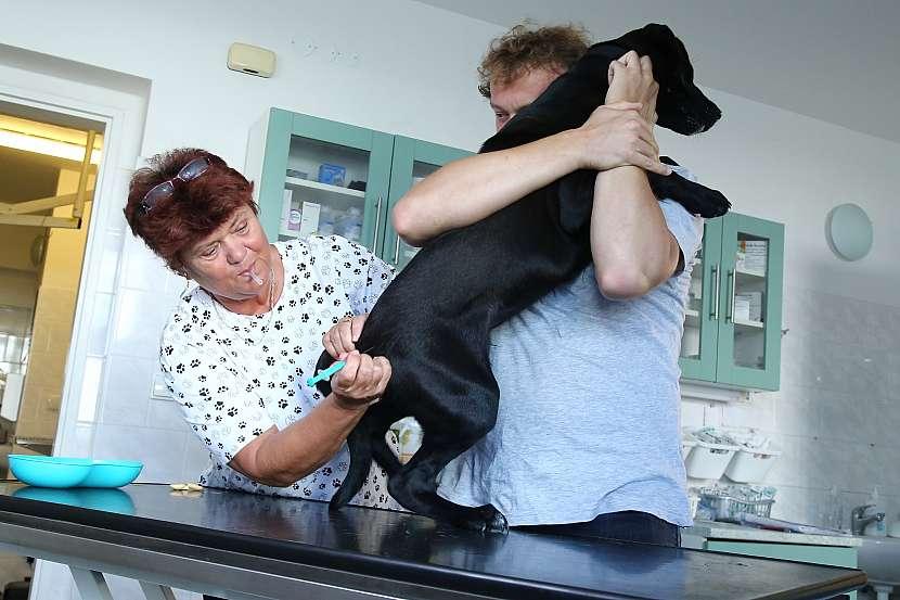Očkování je jediná možnost, jak ochránit psy před tetanem