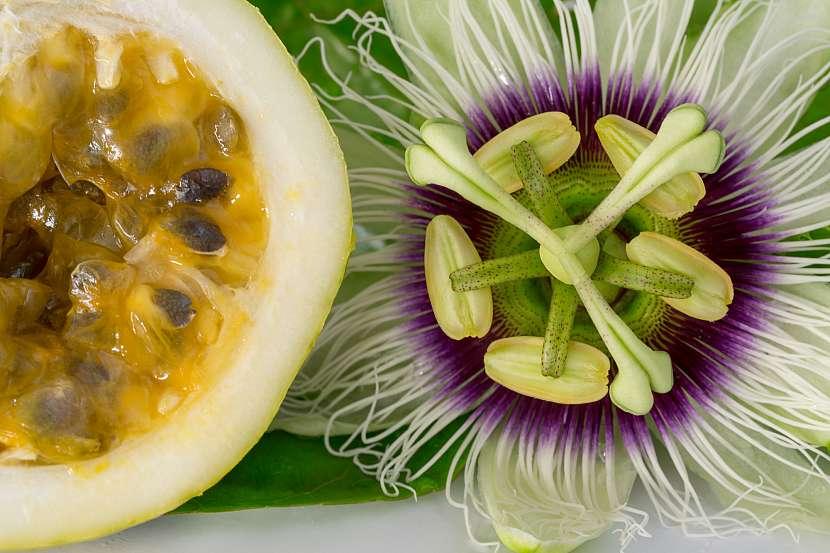 Mučenka květ a její plod