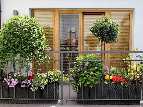 Pěstování na balkoně je klíčem k psychické pohodě, pokud nemáte zahrádku (Zdroj: Depositphotos (https://cz.depositphotos.com))