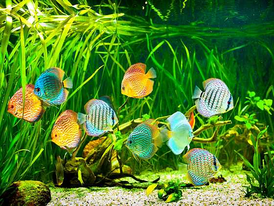 Akvárium s rybami je uklidňující zábava pro celou rodinu (Zdroj: Depositphotos)