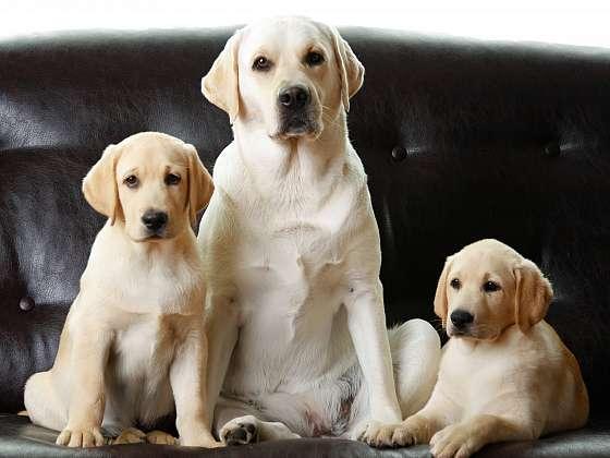 Psi potřebují pravidelnou péči (Zdroj: Depositphotos)