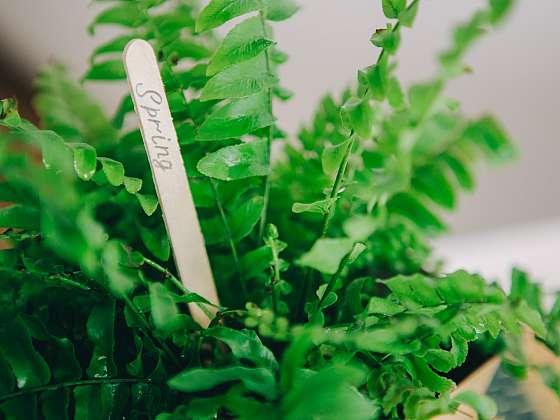 Kapradiny pěstujte i jako pokojové rostliny (Zdroj: Depositphotos)