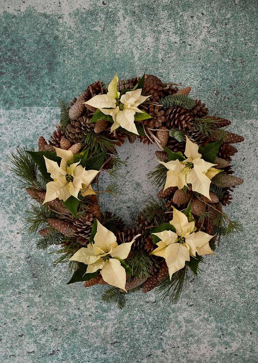 csm_2020_poinsettia_01000_Christmas_Green_Spirit_19_40a5a9beb9