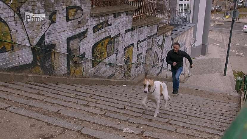 Muž se psem na schodech