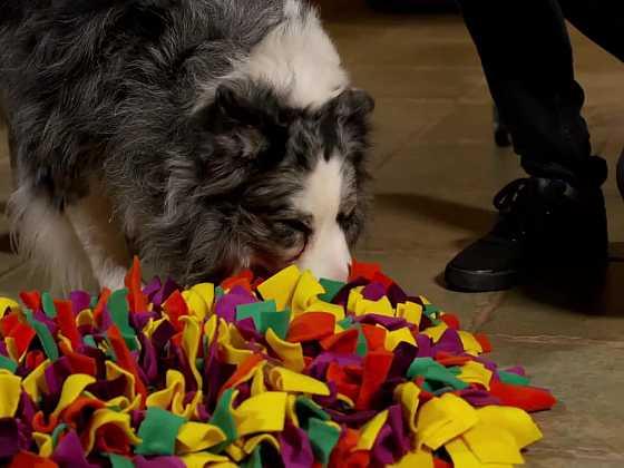 Kobereček z flísu patří mezi interaktivní hračky pro psy (Zdroj: Prima DOMA)
