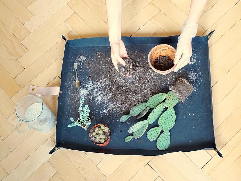 Přesazování kaktusů