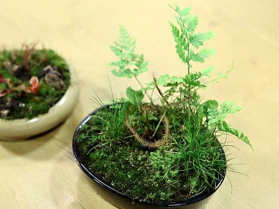 Jak se postarat o masožravé rostliny: Minizahrádky z masožravých rostlin 3