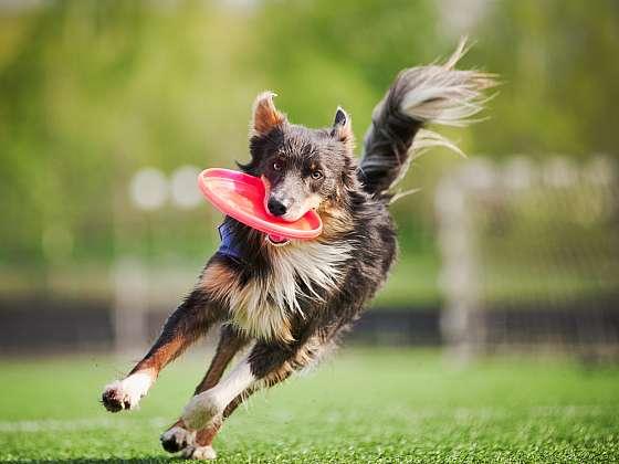 Pohyb si psi užívají, ale i je mohou potkat nejrůznější obtíže (Zdroj: Depositphotos (https://cz.depositphotos.com))