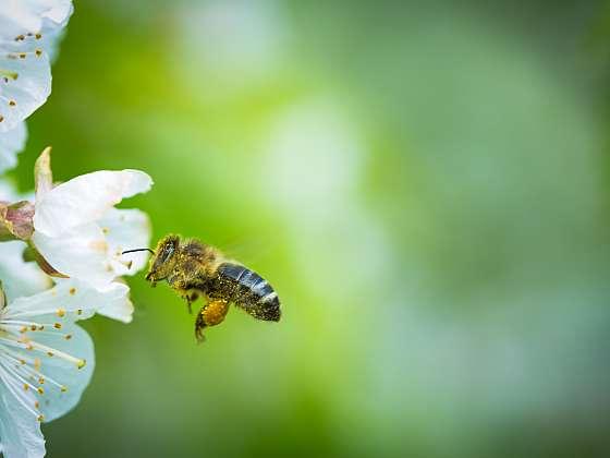 I vy můžete chovat včely! (Zdroj: Depositphotos (https://cz.depositphotos.com))