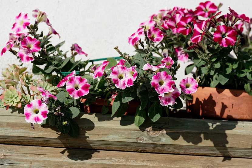 Rostliny v truhlíku