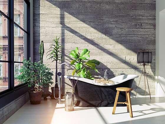 I v koupelně můžete pěstovat rostliny, jen si musíte vybrat ty správné (Zdroj: Depositphotos (https://cz.depositphotos.com))