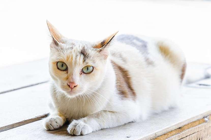 Roztomilá kočka