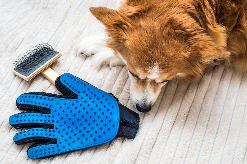 Vyčesávací rukavice, pes