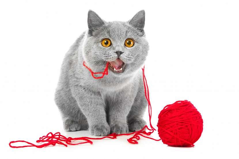 Kočka s klubkem