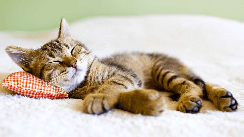 Jak připravit pejskovi a kočičce bezproblémový příchod do nového domova: 5 užitečných rad 4