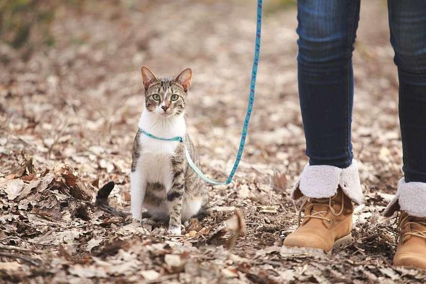 cestování s kočkou