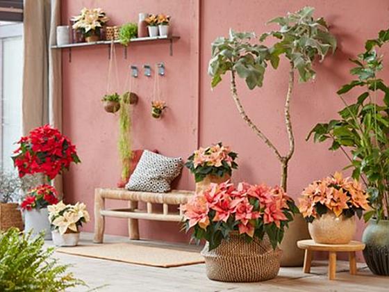 Podzimní splín zažeňte barvami (Zdroj: Stars for Europe)