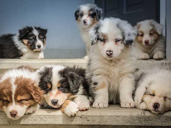 Pes je věrný kamarád, ale i velká zodpovědnost (Zdroj: Unsplash)