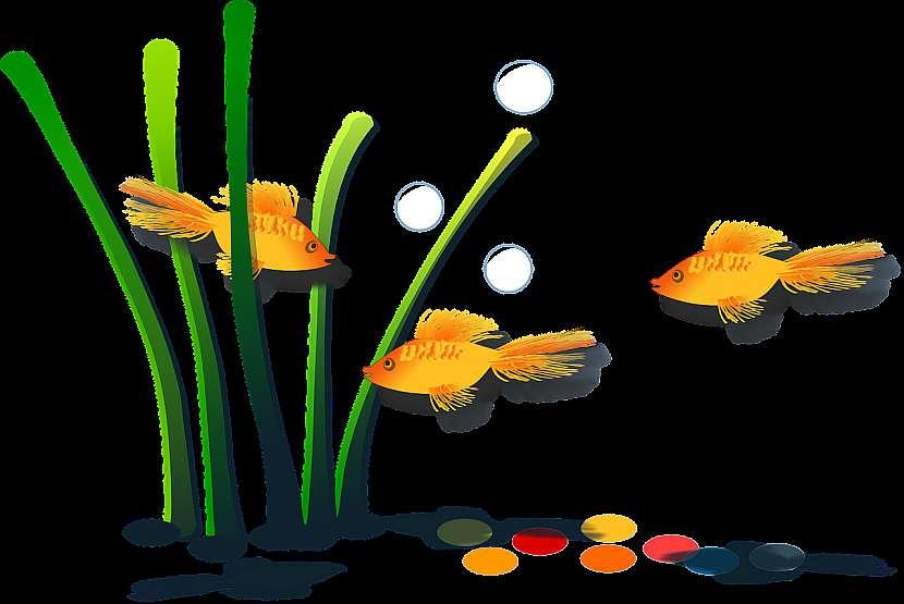 Jak chovat v akváriu zlaté rybky: Splněná přání ale nečekejte 2