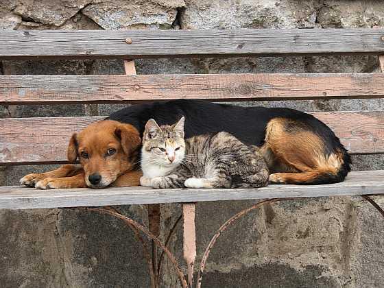 Předejděte otravě u zvířat (Zdroj: Depositphotos)