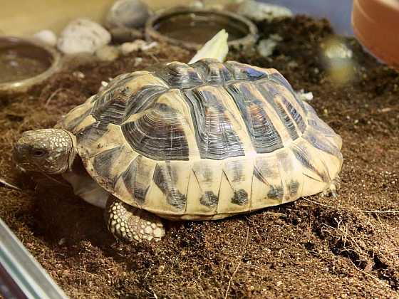 I želva může být vaším domácím mazlíčkem (Zdroj: Archiv FTV Prima)