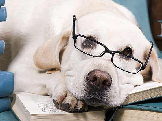 K výcviku štěněte je třeba přistupovat zodpovědně, s trpělivostí a láskou (Zdroj: Depositphotos (https://cz.depositphotos.com))