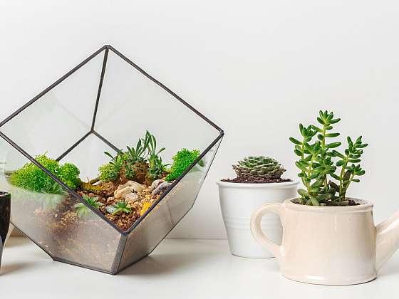 Florárium si můžete založit doma, není to složité (Zdroj: Depositphotos)